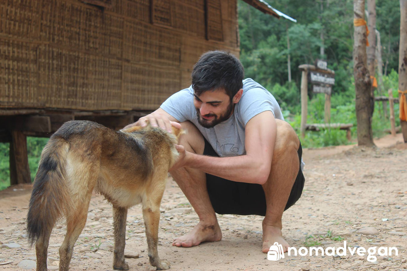 soi dog foundation thailand animal sanctuary